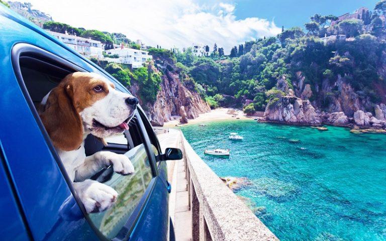 寵物旅遊行業突出重圍 攜寵出行需處理的問題